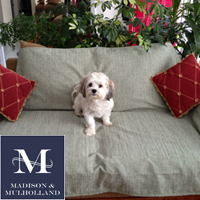 Madison  Mulholland - Anti-Odor Pet Throw